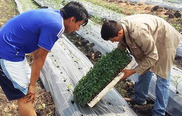 ¿En dónde estudian los jóvenes agrónomos?
