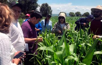 Revisión de los sistemas de producción, almacenamiento, transporte y certificación del producto, determinarán las medidas fitosanitarias para la exportación del grano de nuestro país