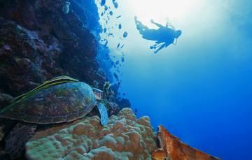 Submarina de tortuga y buzo en relieve marino.