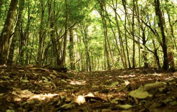 Frontal de grupo de árboles de selva tropical mexicana