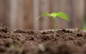 Frontal de pequeña planta verde sembrada en la tierra.