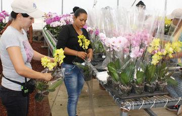 Mujeres jóvenes preparando flores para la venta