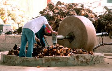 Molienda de piñas en tahona para el destilado de mezcal