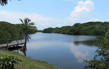 Zona de manglar de Colima rehabilitada por sus pobladores.
