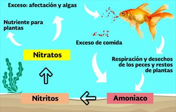Acuaponía: producción sustentable entre el cultivo de plantas y la cría de peces