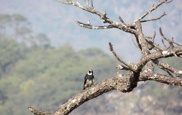 Pájaro carpintero en una rama de un árbol en el bosque.