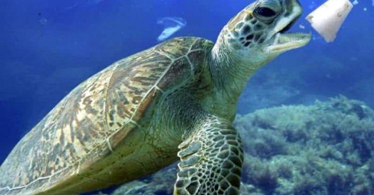 Los productos plásticos generan el 90% de la basura oceánica del planeta