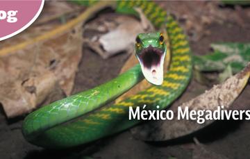 México ocupa el quinto lugar en variedad de plantas y anfibios, el tercero en mamíferos y el segundo en reptiles de todo planeta.