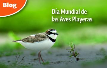 Las aves juegan un papel importante como indicadoras de cambios ambientales.