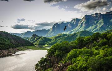 Fotografía aérea de paisaje con ave volando