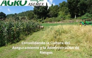 AGROASEMEX,  Cultura del aseguramiento