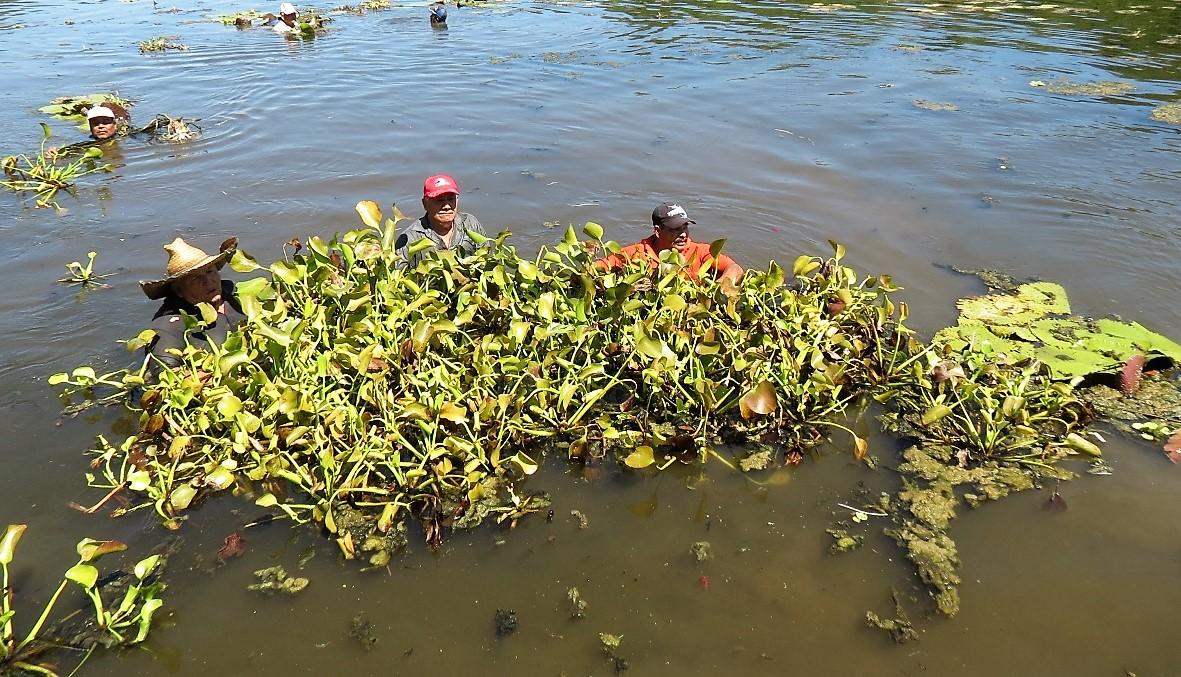 Vista general de trabajadores dentro de laguna en medio de algas.