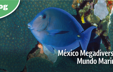 México Megadiverso: Mundo Marino