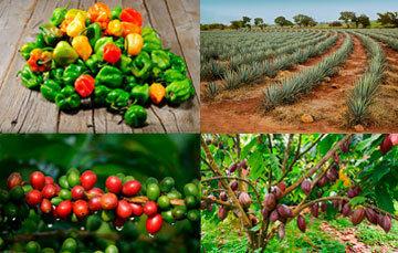 Productos agroalimentarios con Denominación de Origen