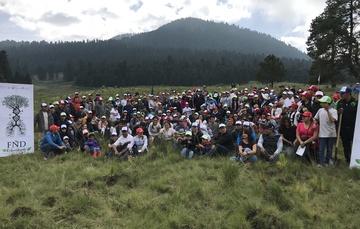 Reforestación FND 2018