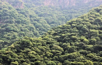Paisaje montañoso de la selva seca en tiempo de lluvias.