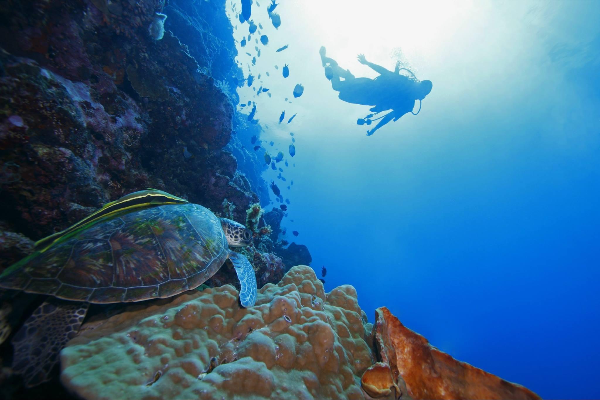 Varias ONs calculan que del tráfico global de biodiversidad terrestre la delincuencia organizada obtiene entre 10 mil y 20 mil millones de dólares anuales, y se desconoce a cuánto asciende la depredación de las especies marinas.