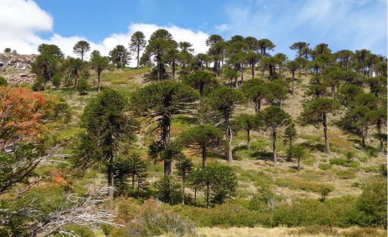 Vista general de colina