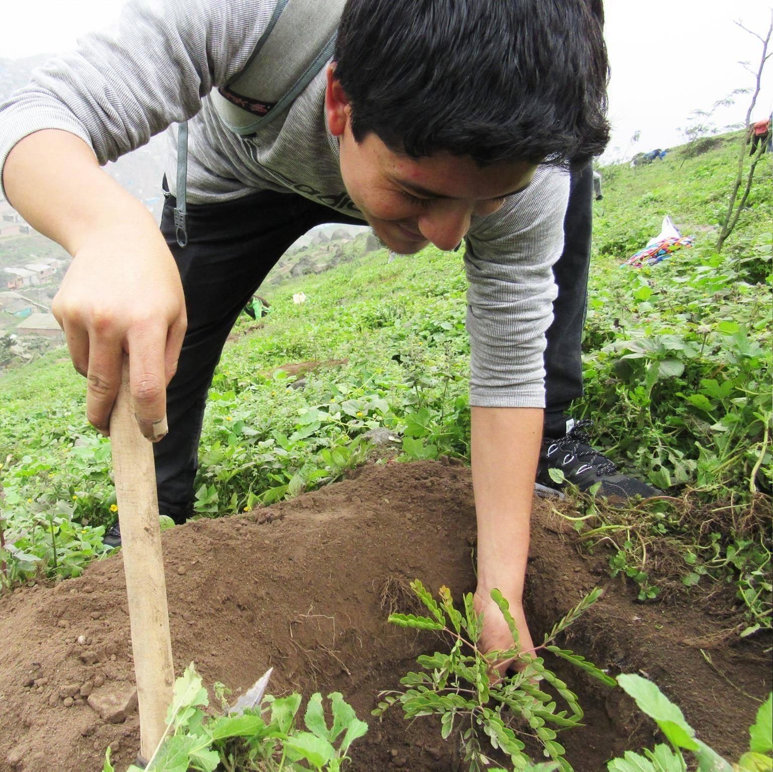 Vista general de hombre plantando ábrol