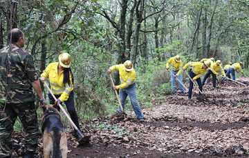 Brigada de vecino de Tlalpuente realizando labores de retiro de hojas en parte de su bosque.