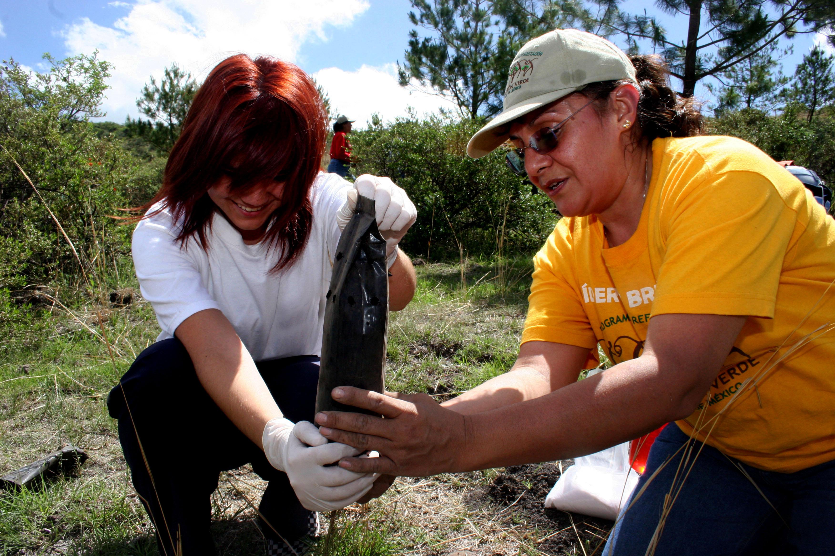 Mujeres jóvenes plantando árboles