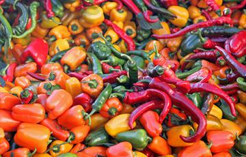 Hoy se conocen al menos 200 variedades criollas y 64 variedades domesticadas en México.