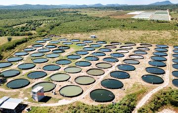 Vive la acuacultura una nueva era en México a favor de la seguridad alimentaria: especialistas