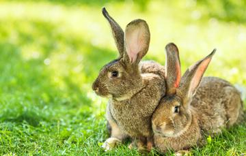 Foto de dos conejos