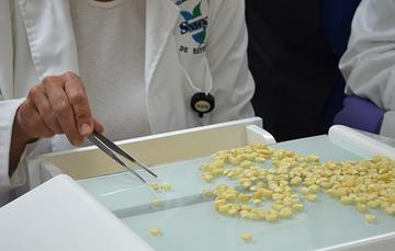 Análisis en laboratorio para determinar la calidad de granos