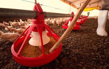 Reporta SENASICA cierre de cuatro focos de Influenza aviar a la OIE