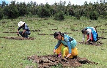 Reforestar es tarea familiar en la montaña tzotzil