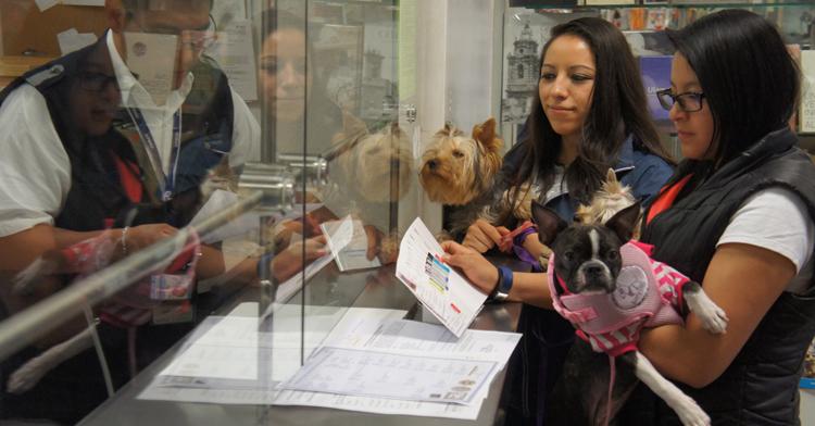 Dgif facilidad de ingreso a mascotas 141118  4  blog