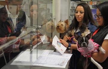 El SENASICA tiene el objetivo de agilizar el ingreso de mascotas al territorio nacional