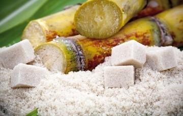 Balance nacional de azúcar del ciclo 2018/2019.