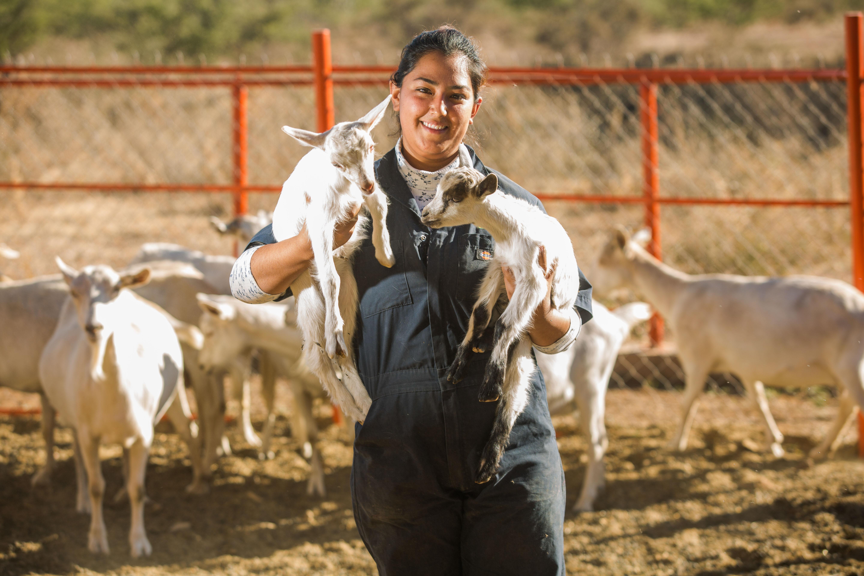 03206ac12204c Los productores mexicanos podrán exportar cárnicos de res y de cerdo a  Singapur. Abre México puertas de Singapur para la exportación de carne de  bovino