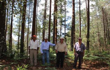 Ejidatarios de Oaxaca en zona boscosa protegida con apoyos de CONAFOR.
