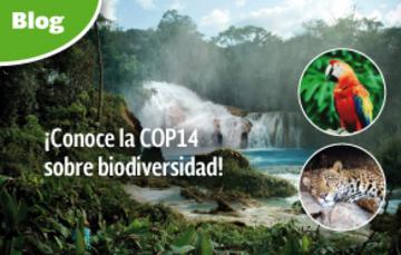 ¡Conoce la COP14 sobre biodiversidad!