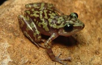 Estas nuevas especies incluyen 10 invertebrados, 1 pez, 2 anfibios, 6 especies de plantas, 1 bacteria y 1 hongo.