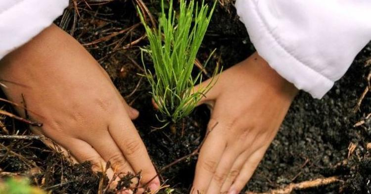 PNUMA, 46 años de coadyuvar a la solución de problemas ambientales