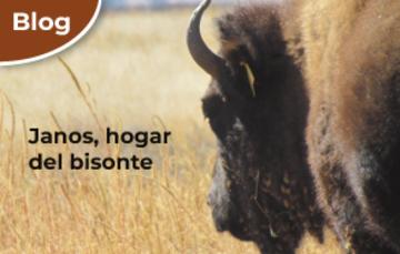Janos, hogar del bisonte