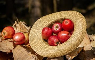 Sombrero con manzanas sobre trozos de leña.