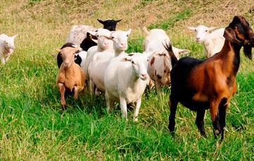 Se establecen las bases para prevenir, controlar y erradicar enfermedades y plagas de los animales a través de la vigilancia epidemiológica