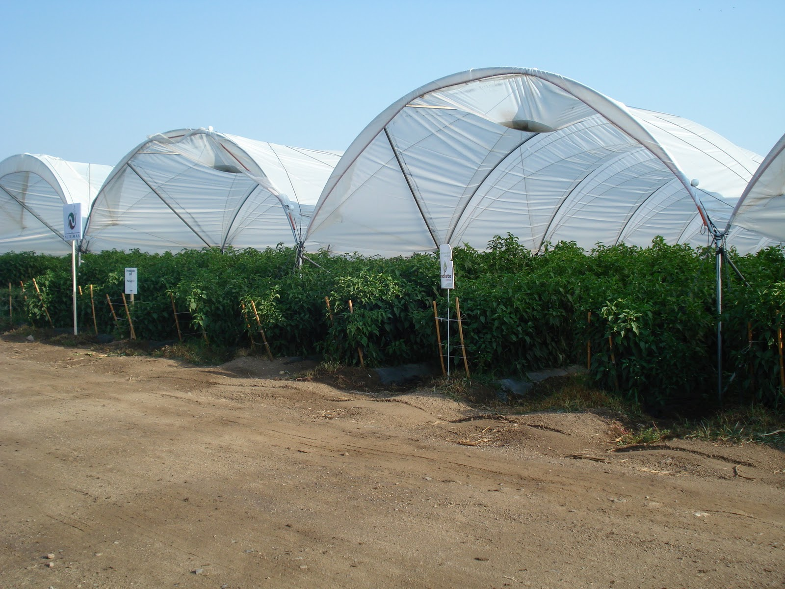 Agricultura protegida.