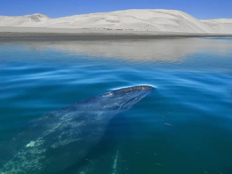 Reserva de la Biósfera Complejo Lagunar Ojo de Liebre | Secretaría de Medio  Ambiente y Recursos Naturales | Gobierno | gob.mx