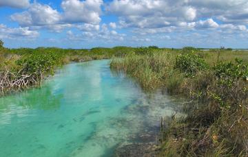 Sian Ka´an tiene un sistema de ríos subterráneos de agua dulce que interconectan los cenotes y los Petenes.