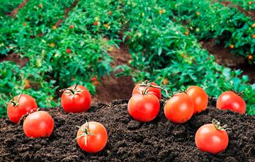Cultivos aptos para sembrar y trasplantar