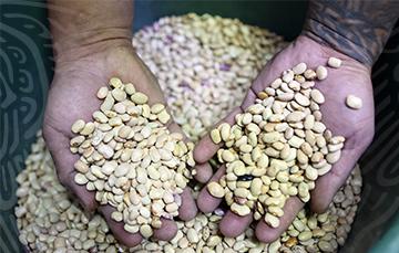 Programa Precios de Garantía a Granos Básicos apoya a campesinos