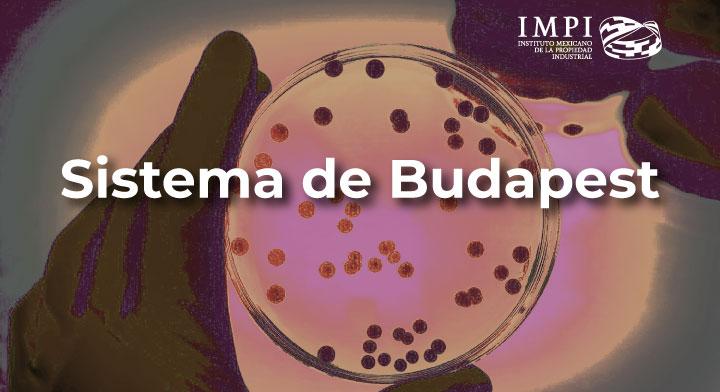 Sistema internacional de depósito de microorganismos - Budapest