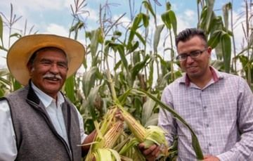 Imagen que muestra a dos personas en una siembra de maíz