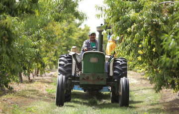 Imagen de un señor en un tractor